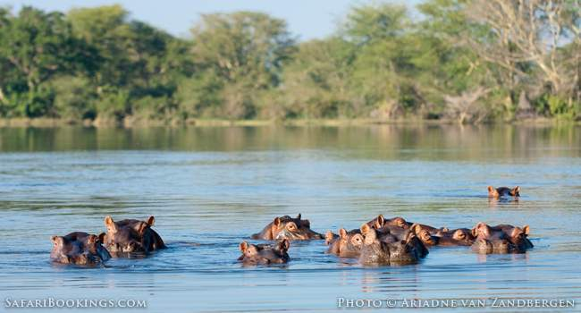 Boating Between Hippos And Elephants in Liwonde
