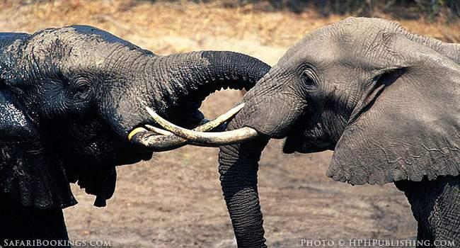 Safari Possibilities in Namibia, Secrets Part 2