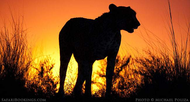 Innovation & Change in Southern Africa's Safari Industry