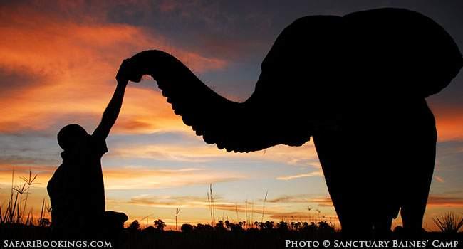 Learn Bush Skills And Elephant Lore