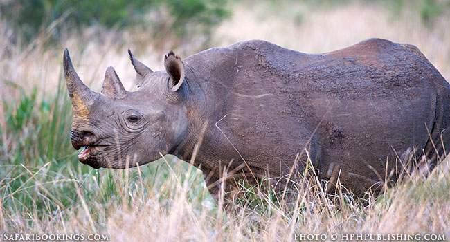 Safari Secrets Part 1: Swaziland