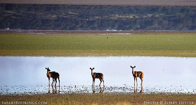 Transfrontier Parks in Southern Africa