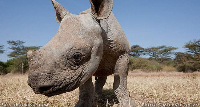Rhino Poaching: The Facts & The Crime