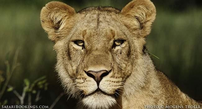 Hunting Safaris: Abomination or Income Generator