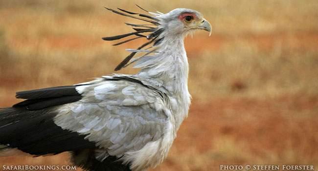Zambian Birds - Fluffy little Rainbows or Messengers of Doom?