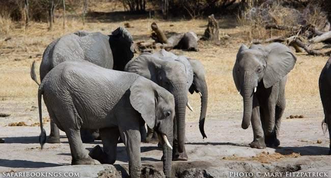 Tanzania's Southern Safari Circuit