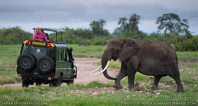 The Unfortunate Impact of the Ebola Outbreak on the Safari Industry