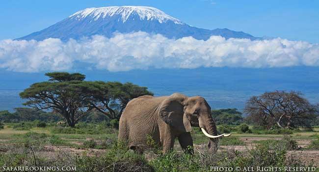 Climbing to the Snows of Mount Kilimanjaro