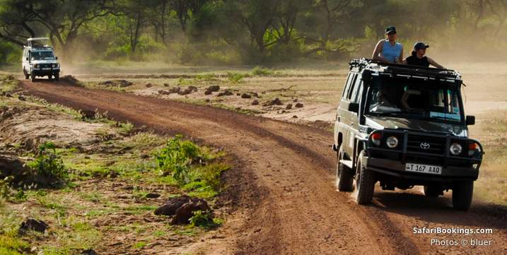 10 insights what to expect on safari - up to 4 hour game drive