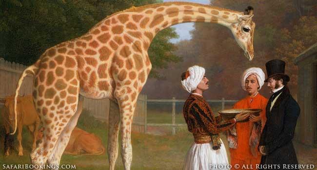 The Royal Giraffe: A History