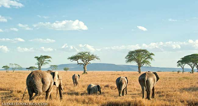 Top 50 Best African Safari Parks and Destinations of 2015