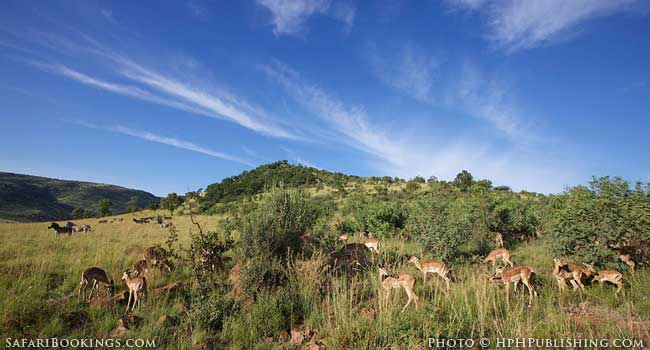 5 of the Best Family-Friendly Safaris in South Africa - Pilanesberg