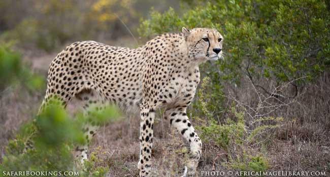 5 of the Best Family-Friendly Safaris in South Africa - Shamwari