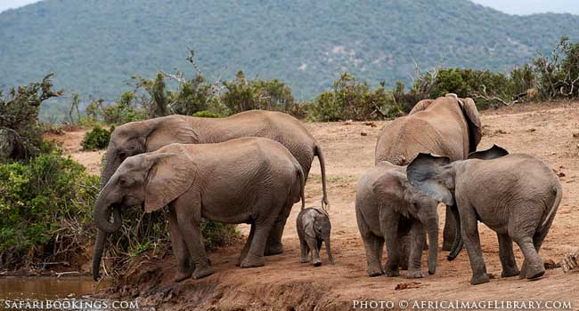 5 of the Best Family-Friendly Safaris in South Africa - Addo