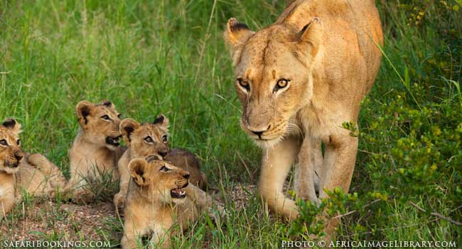 5 of the Best Family-Friendly Safaris in South Africa - Kruger