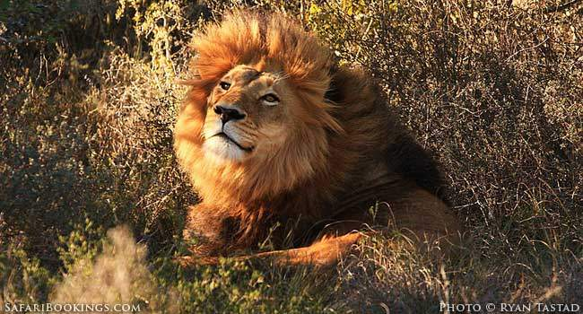 A Lion Stalking, a Kingfisher Diving: Capturing that Perfect Photo