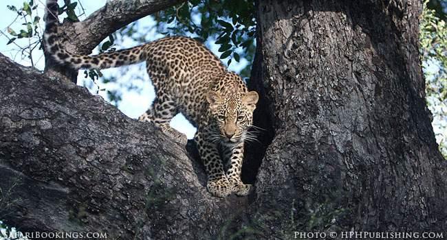 Safari Safety: Keep Your Window Closed!