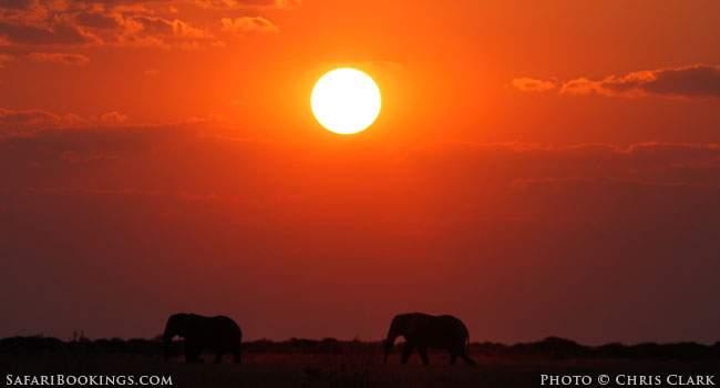 Taking better safari pictures light