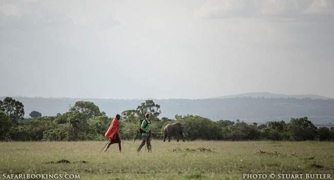 Walking With The Masaai - Elephant