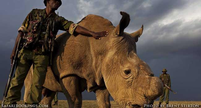 The Last Male Northern White Rhino