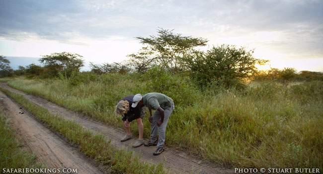 Becoming An African Safari Guide