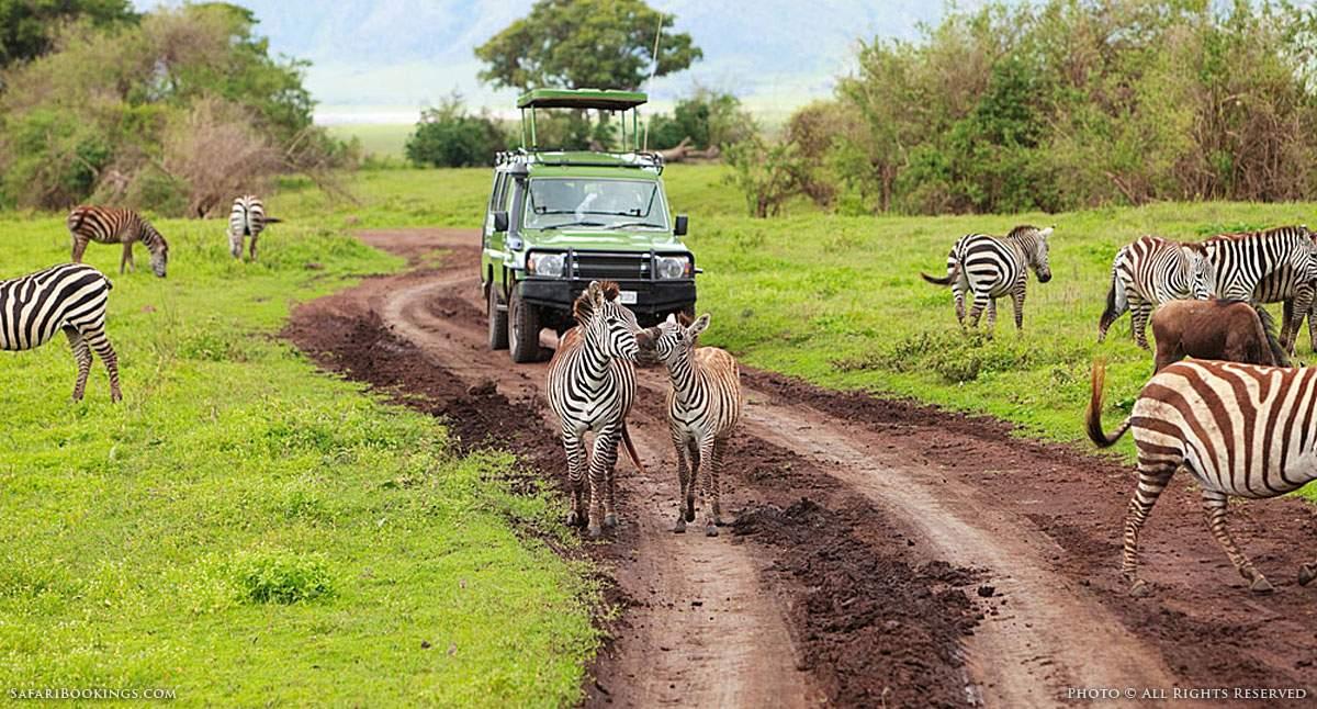 VAT Changes in Tanzania Affect Tour Operators and Safari Tourists