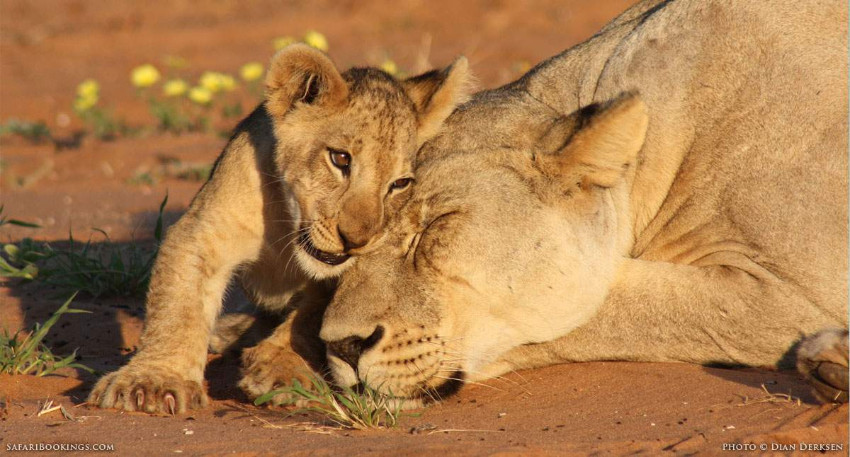Why Patience Is a Virtue on an African Safari