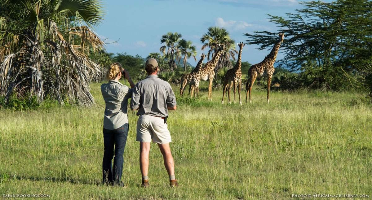 Watching Wildlife on an African Walking Safari