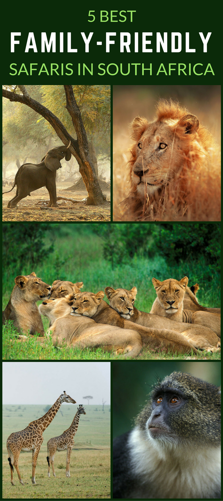 It can be difficult to find family-friendly safari destinations that are accessible and safe for the whole family. But if the kids aren't decent enough to agree to be left at home, South Africa is certainly your best bet for the whole family. Click through to find out why!