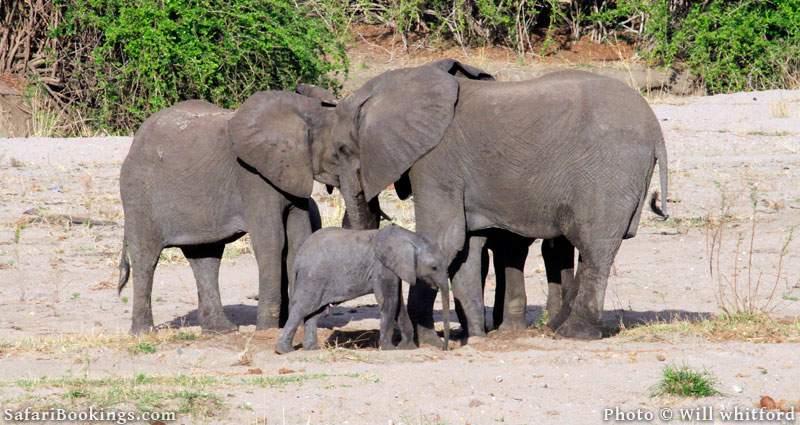 Elephants in Ruaha National Park