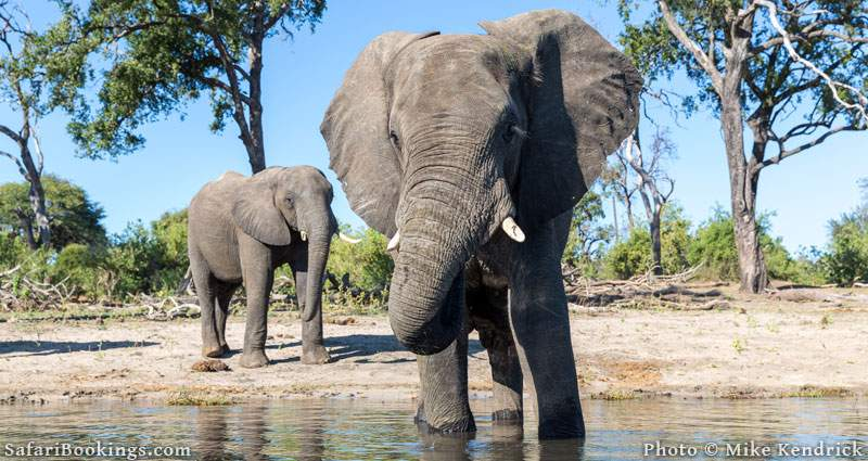 Where to See Elephants in Africa - Chobe National Park in Botswana
