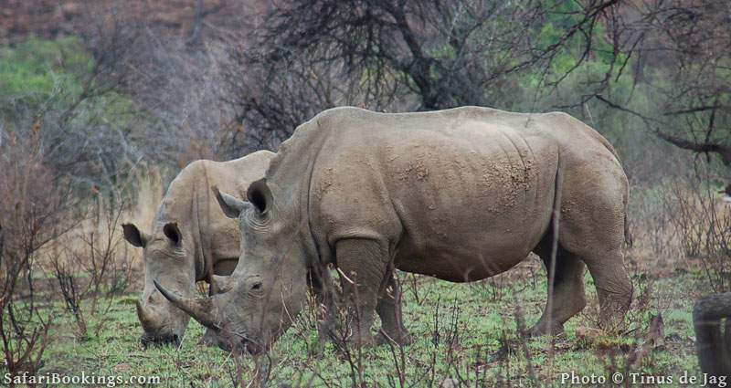2. Pilanesberg Game Reserve, South Africa
