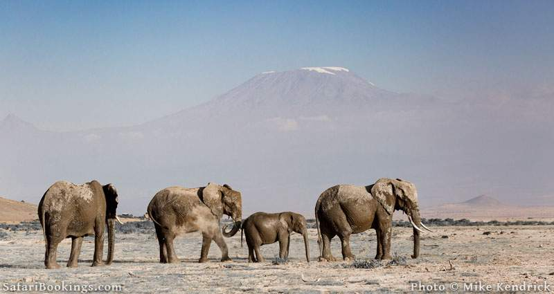 Where to See Elephants in Africa - Amboseli National Park in Kenya