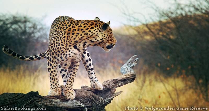 3. Welgevonden Game Reserve, South Africa