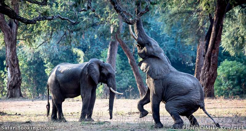 Where to See Elephants in Africa - Mana Pools National Park in Zimbabwe