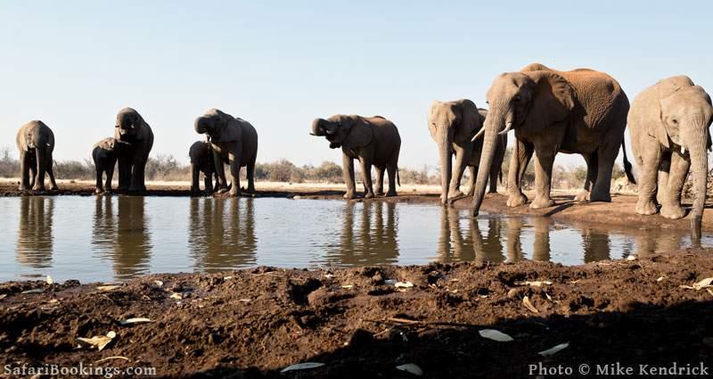 Where to See Elephants in Africa - Mashatu Game Reserve in Botswana