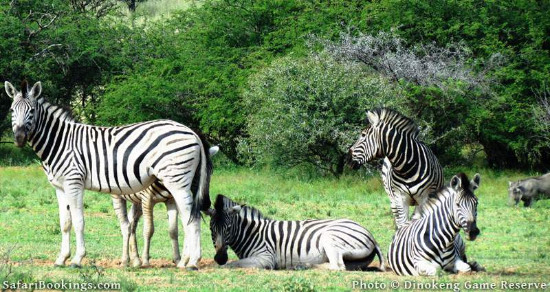Dinokeng Game Reserve, South Africa