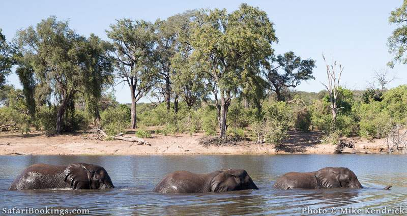 Where to See Elephants in Africa - 5. South Luangwa National Park in Zambia