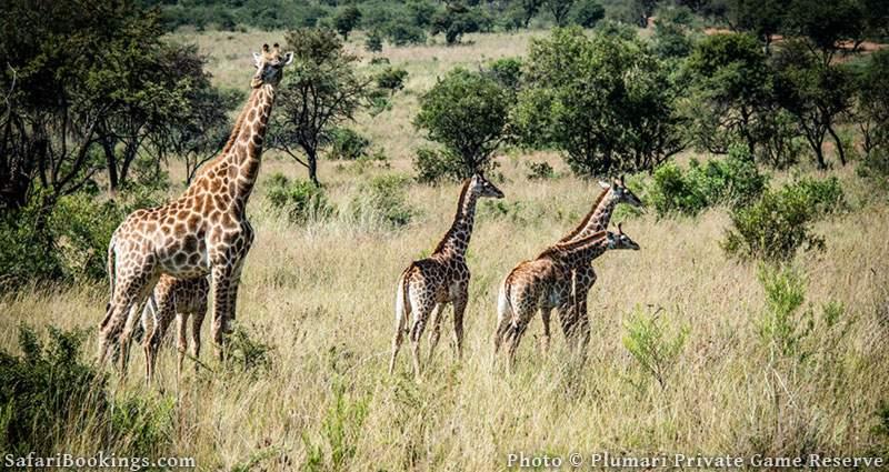 Plumari Private Reserve, South Africa