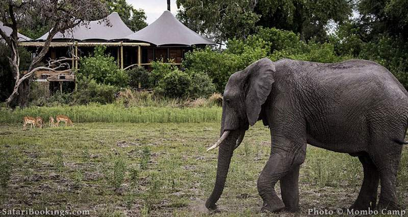 Mombo Camp is one of the Best Botswana Safari Camps