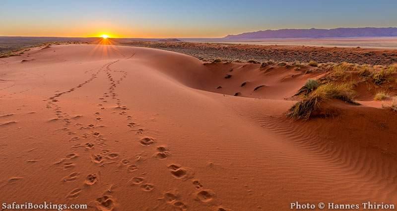 Sunset over the sands dunes, Kalahari Desert