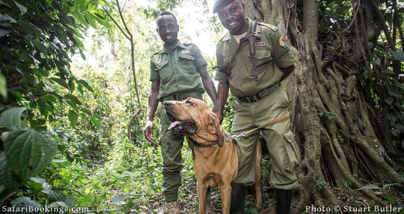 Bloodhounds Help in the Fight Against Poaching