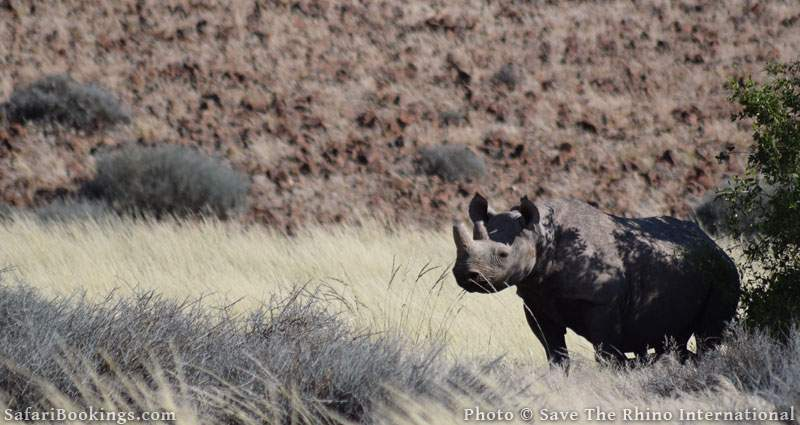 On a mission to save the rhino