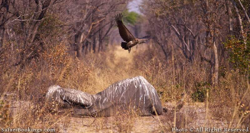 Africa's Poaching Pandemic Has Hit Hardest in Selous Game Reserve