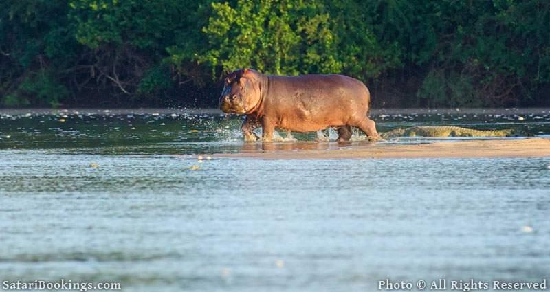 Rufiji River in Selous Game Reserve