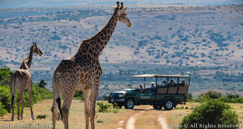 Shamwari Game Reserve - One of the best malaria free game reserves in South Africa