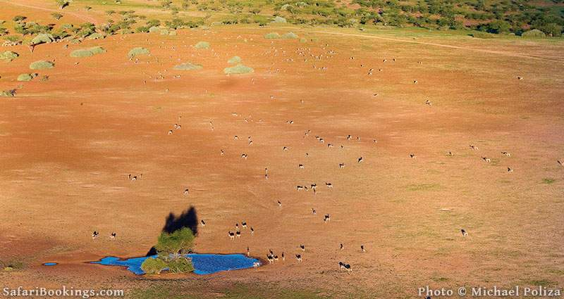Sustainable African Safari Park Damaraland