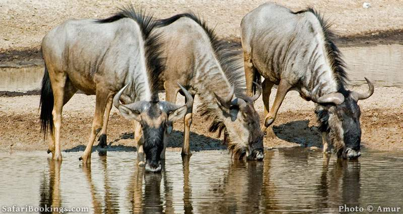 Sustainable African Safari Park Makgadikgadi