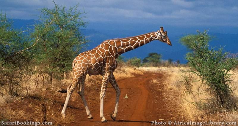 Sustainable African Safari Park Meru National Park