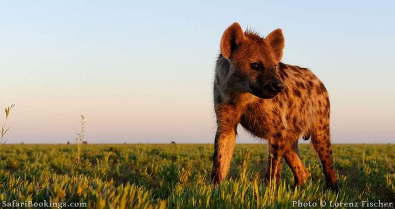 Sustainable African Safari Park Liuwa Plains
